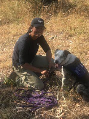 Chú chó anh hùng gây xôn xao cộng đồng mạng khi sở hữu siêu năng lực giúp giải cứu gấu koala gặp nạn trong thảm họa cháy rừng ở Úc - Ảnh 2.